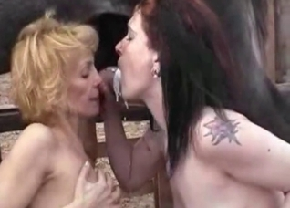 Two girls are sucking a horse